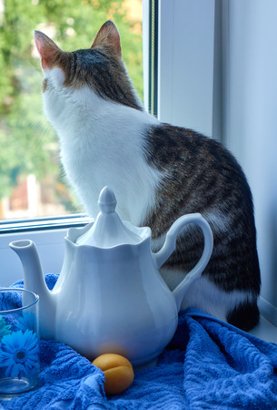 Cat sitting on the windowsill looking on the street near the white teapot, cup with a blue flower and apricot on the blue towel still life image