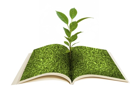 Book open and the seedlings grow Stock Photo