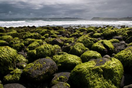 Stones covered in moss at low tide