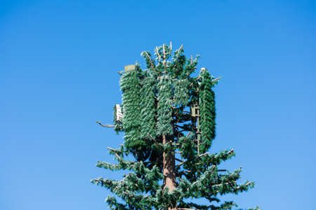 Cell phone telecommunications tower disguised and camouflaged as a fake tall pine tree under blue sky. The concealed cell station is distinguished by foliage shape and bark type.
