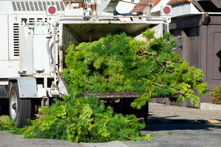 Wood chipper loaded with cut green tree branches in urban neighborhood.