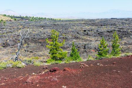 Scenic view of volcanic lava rocks with green conifer trees. Foto de archivo