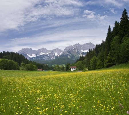 streifzug: Bl�hen Sie Feld in Tirol, �sterreichischen Alpen