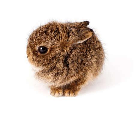 Wild little rabbit isolated on white photo