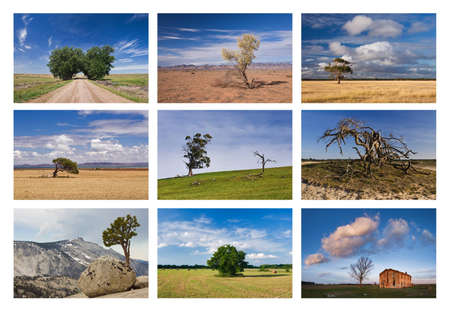 standalone: Standalone trees collage in different places of Earth planet Stock Photo