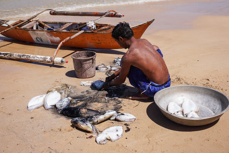 A fisherman is cleaning up some squids he just brought ashore