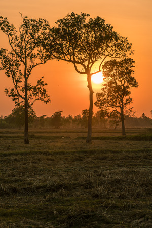 The sun is setting in the rural fields of Thailand