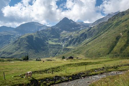 An idyllic scene at the green valley of Sportgastein in the Gasteiner Tal, Austria in Summer