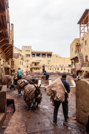 Donkeys are used to transport leather in the tanneries of Fes, Morocco