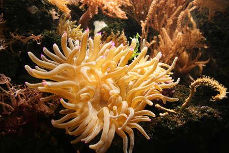 A nice spaghetti-like coral. Stock Photo - 230756