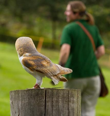 captivity: An owl in captivity
