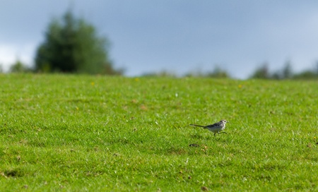 A small bird in a green field Stock Photo - 11694434