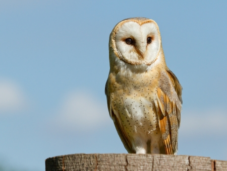 A sitting owl photo