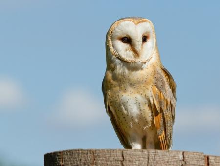 A sitting owl