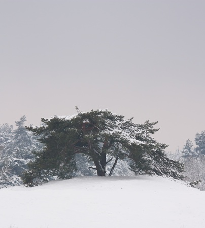 A tree in a very cold dutch landscape  photo