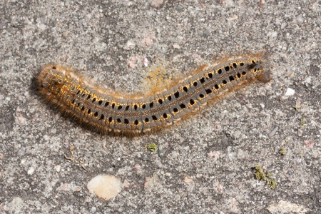 A caterpillar on a stone
