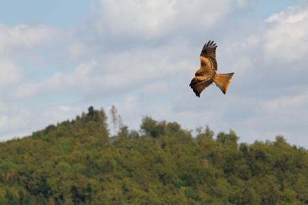 A long-legged buzzard in the sky photo