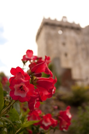 Garden at an Irish castle (Blarney Castle) photo