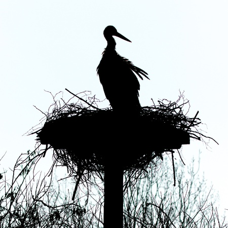ciconiiformes: A silouette of a stork on a nest