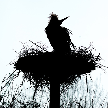 A silouette of a stork on a nest photo