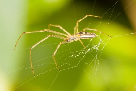 Large spider in a web with a green background photo