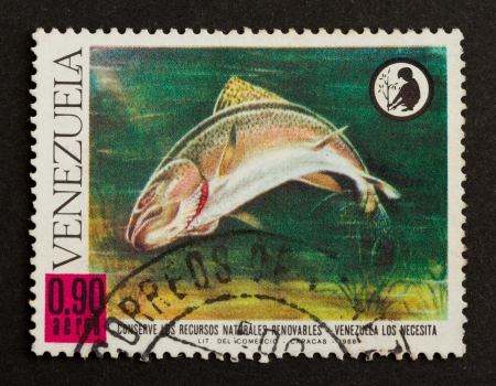 VENEZUELA - 1968: Stamp printed in the Venezuela shows a large fish, 1968 photo