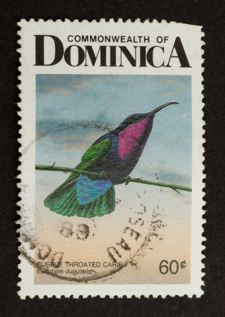 postmail: DOMINICA - CIRCA 1980: Stamp printed in Dominica shows a purple throated carib, circa 1980 Stock Photo