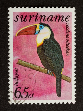 postmail: SURINAME - CIRCA 1980: Stamp printed in Suriname shows a White-throated Toucan, circa 1980