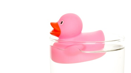 Pink duck in a glass of water photo