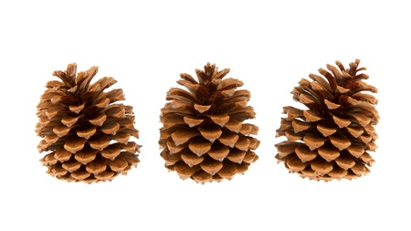 Three pine cones isolated on a white background Stock Photo - 14429782