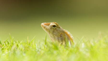 Close up of a lizard in the green grass photo