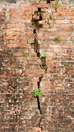 Brick wall with a crack and plants, isolated Stock Photo - 15168180