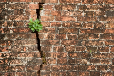 Brick wall with a crack and plants, isolated Stock Photo - 15168181