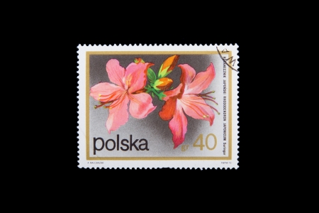 POLAND - CIRCA 1990: Stamps printed by Poland, shows flowers of the Rhododendron, circa 1990