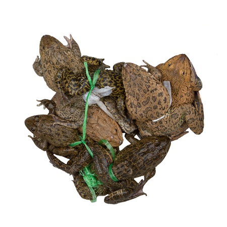 common market: Toads for consumption are being sold on a Vietnamese market (Dong Hoi)