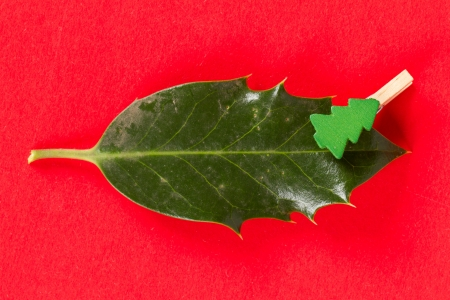 Small clothes pin with a christmas tree on a leaf (butchers broom), isolated photo