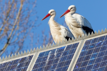 ciconiiformes: Pair of storks standing on a solar panel, winter Stock Photo