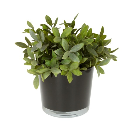 Plastic plant in a flowerpot isolated on white Stock Photo - 16804708