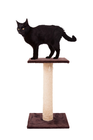 housecat: Black cat with a scratch pole isolated on white