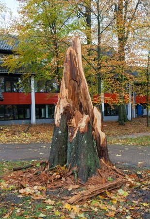 residential tree service: Storm damage after a big storm in the Netherland Stock Photo