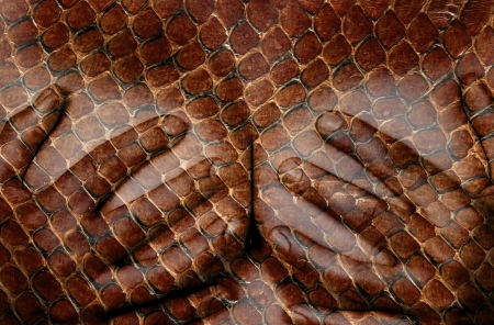 Upper part of female body, hands covering breasts, snake Stockfoto
