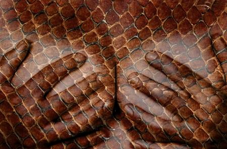 ragazza nuda: Parte superiore del corpo femminile, le mani che coprono i seni, serpente