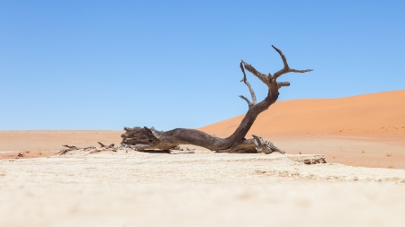 Dead acacia trees and red dunes of Namib desert, Deadvlei (Sossusvlei), Namibia photo