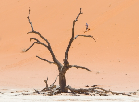 SOSSUSVLEI, NAMIBIA, 26 dec 2013 - Tourist runs down a red dune. Namibia is famous for its red dunes in the south of the country. NAMIBIA, 2013.