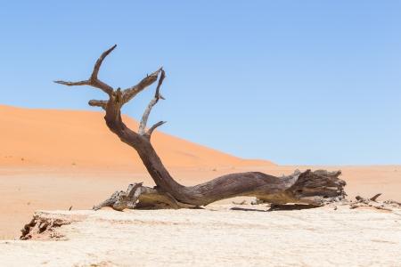 Tote Akazienbäumen und roten Dünen der Namib-Wüste, Deadvlei (Sossusvlei), Namibia