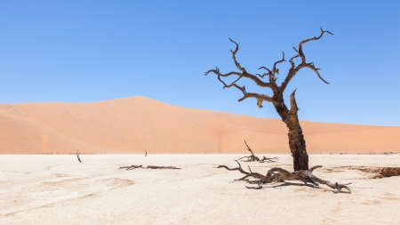 Dead acacia trees and red dunes of Namib desert, Deadvlei (Sossusvlei), Namibia