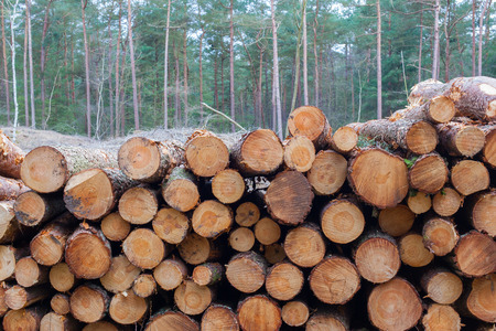 forestry industry: Forestry industry tree felling and timber logging