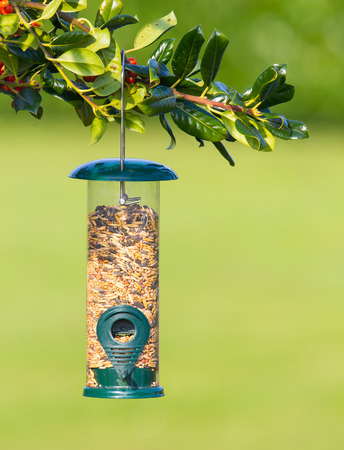 perch dried: Bird feeder full of seeds hung in the tree