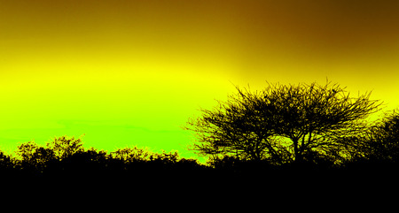 Picturesque tree and bushes silhouette over sunset, yellow photo