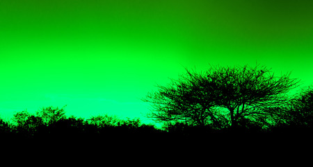 Picturesque tree and bushes silhouette over sunset, green photo